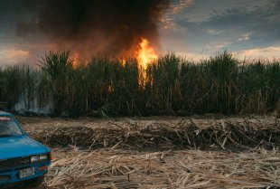 Burning-Sugar-Cane-this-changes-everything-WEB.jpg