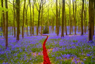 Remember-Bluebell-Woods-1.jpg